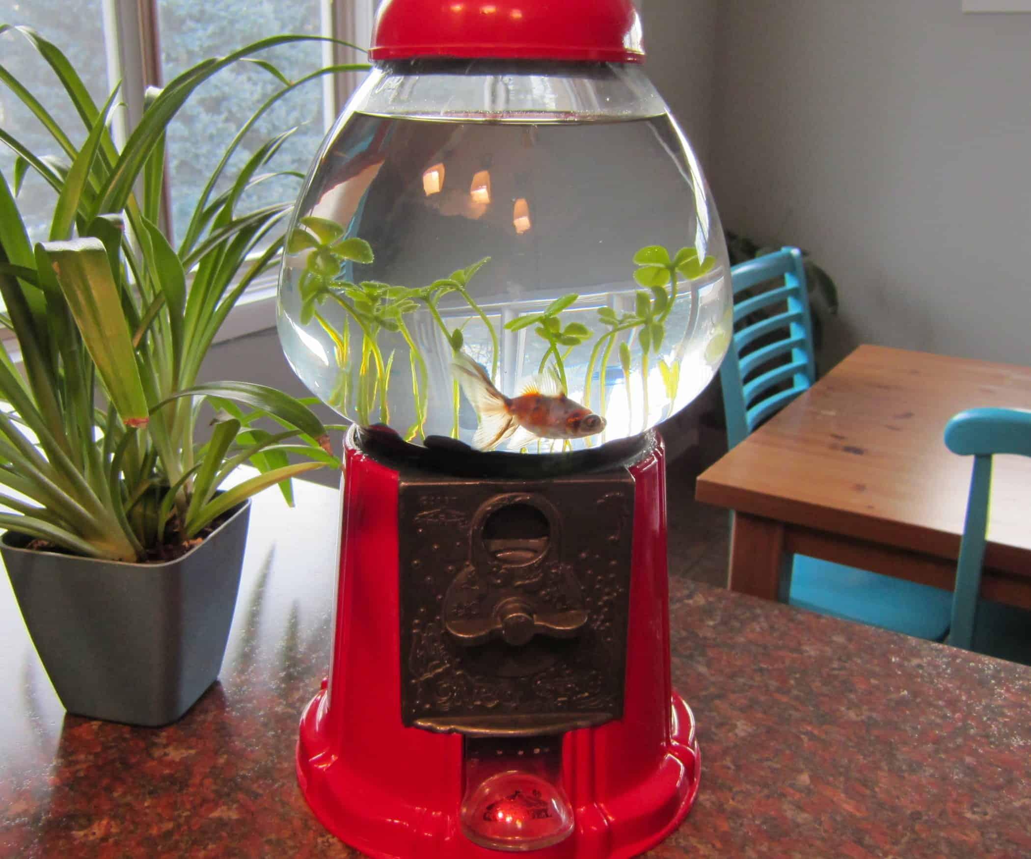 Gumball Fish Tank
